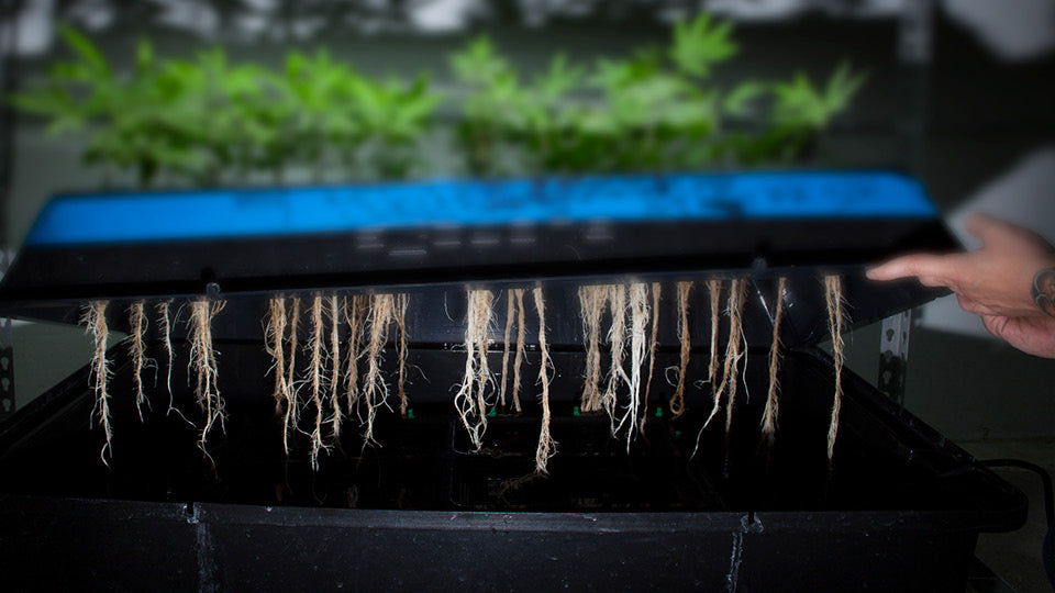 Great Read on Beginning Hydroponics from Advanced Nutrients