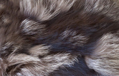 Image of fur