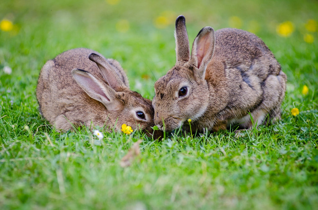 The Importance of Choosing Cruelty-Free Skin Care Products