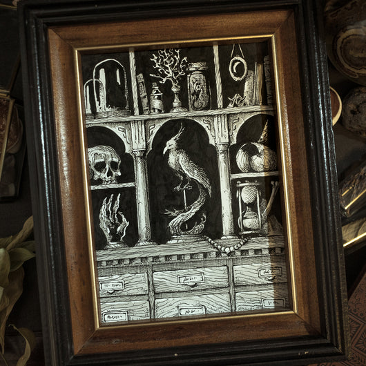Cabinet of Curiosity Original Illustration - Framed