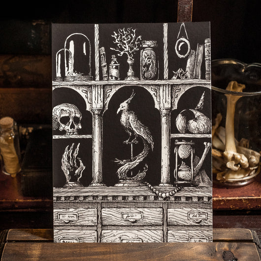 Cabinet of Curiosity Art Print