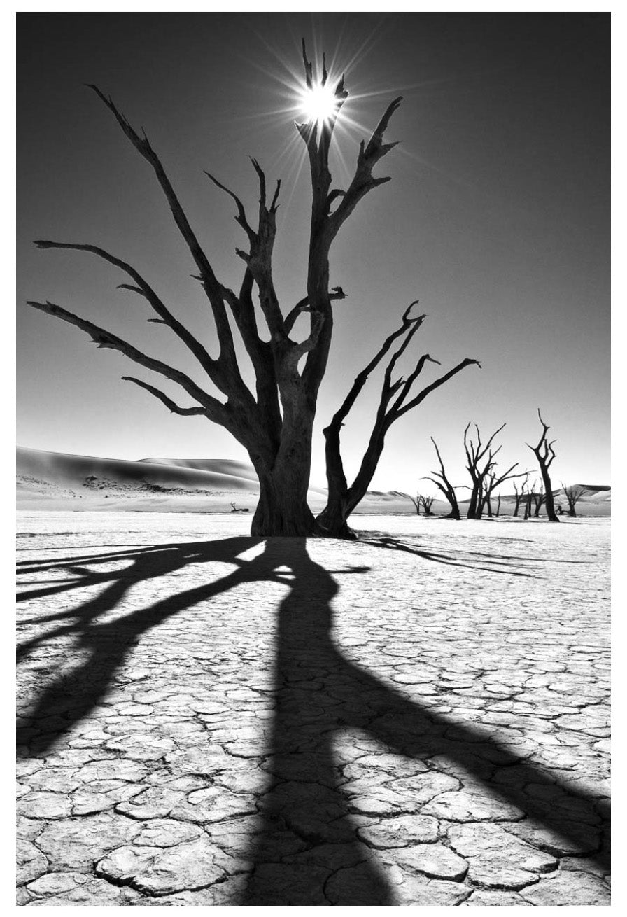 David Ballam wall art featuring a tree in the Namib desert. Available at Sarza home goods and furniture store Rye New York