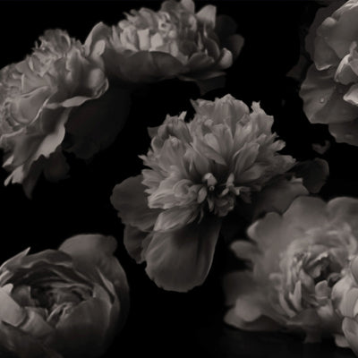 Peonies Black by Robin Sprong at SARZA. Black & White, Carmen Ziervogel, Floral, Robin Sprong, Wallpaper