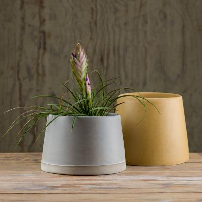 Cone%20planter%20sml%20and%20lg%20oyster%20on%20LCC%20and%20biscotti.jpg