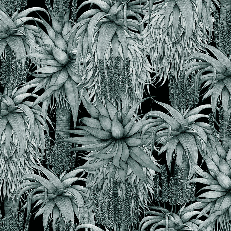 Dancing Aloes – Black And White