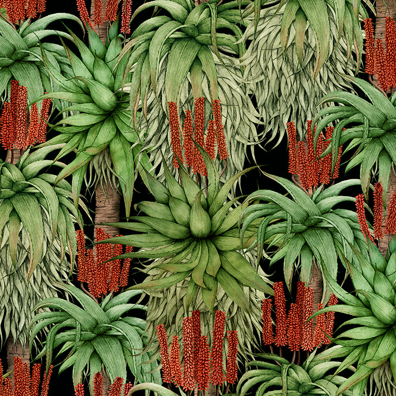 Dancing Aloes – Natural