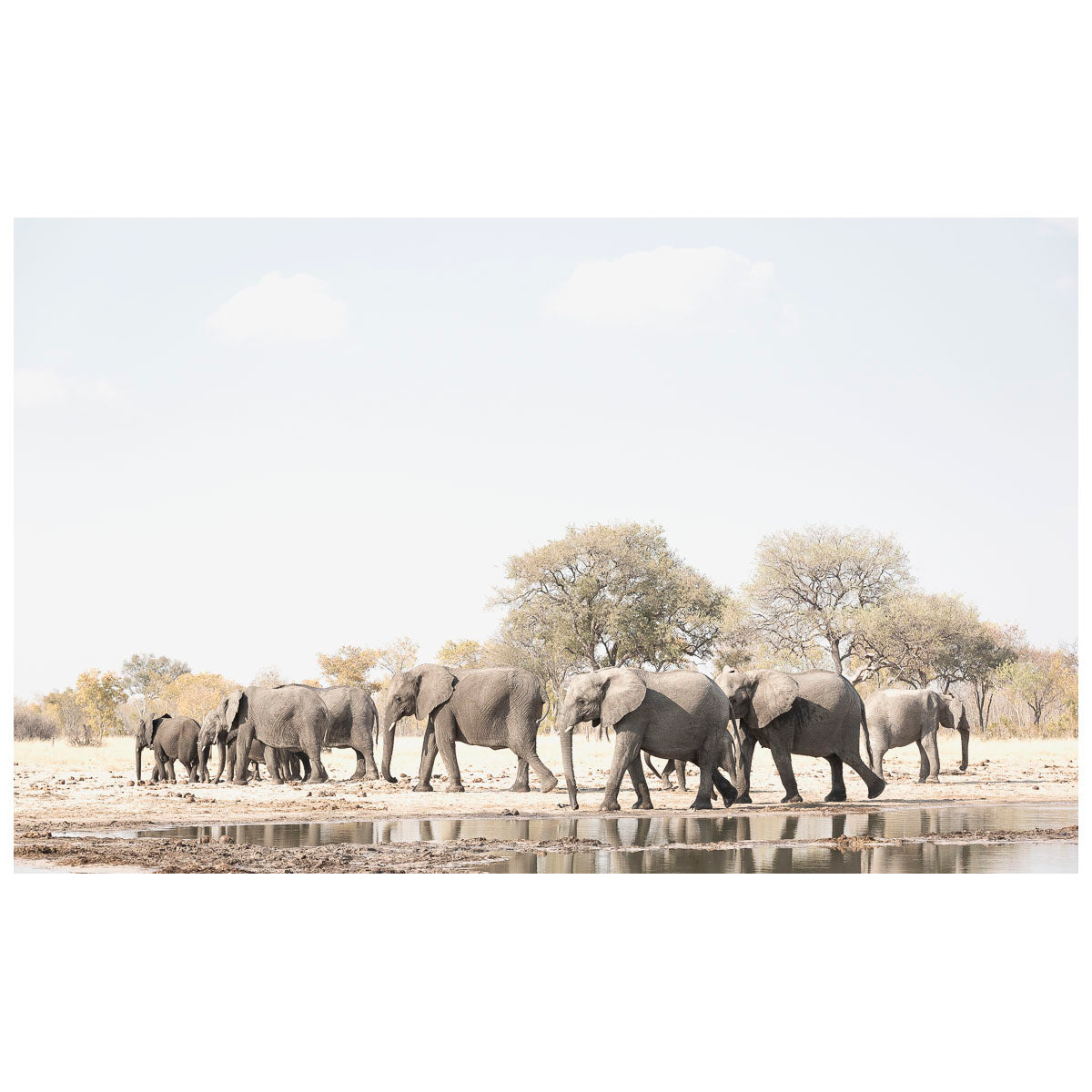 ELEPHANT FAMILY by Jackie Wild Photography at SARZA. art prints, canvas prints, elephant family, framed canvas, Jackie Wild Photography, paper prints, photography, wall art, wildlife