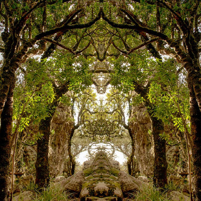 Forest of Arches