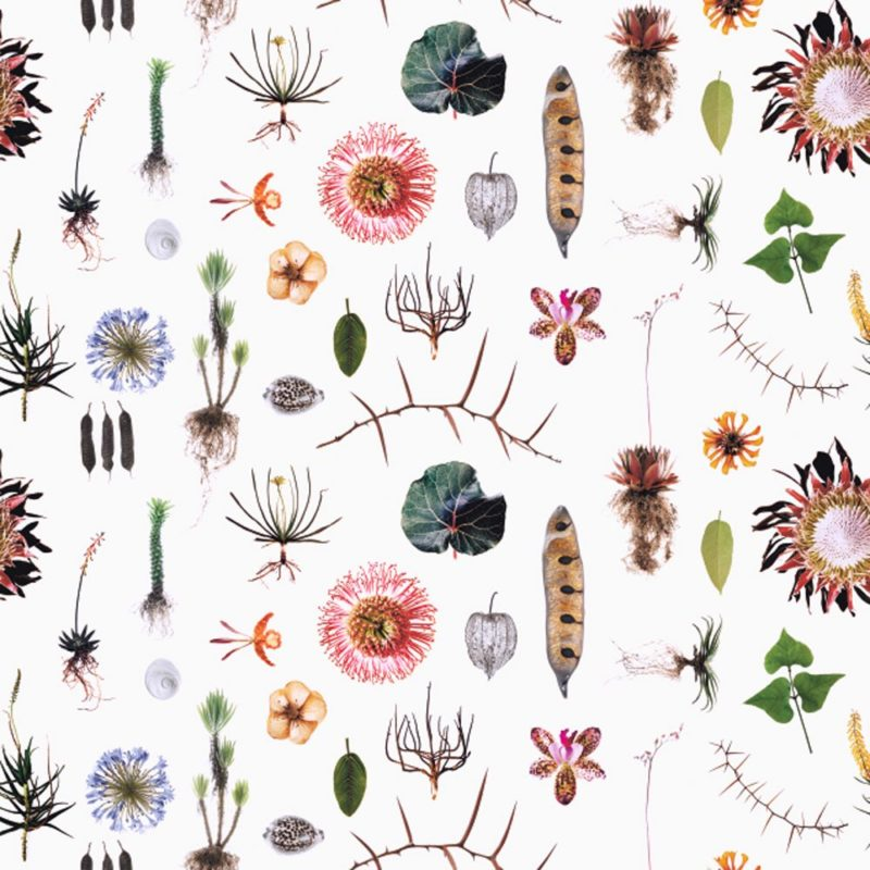 Natural Curiosities by Robin Sprong at SARZA. Botanical, Clinton Friedman, Floral, Robin Sprong, Wallpaper