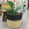 Ombre%20planter.png