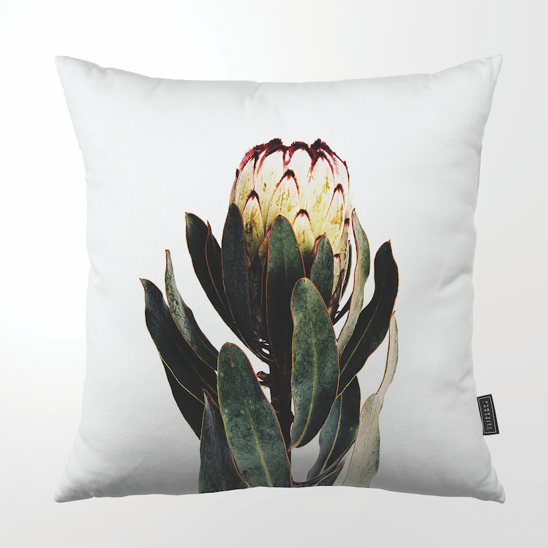 "PINK TIP PROTEA THROW PILLOW by Clinton Friedman at SARZA. 22"", Clinton Friedman, cushion cover, homeware, Pink tip protea, scatter cushion, throw pillows"