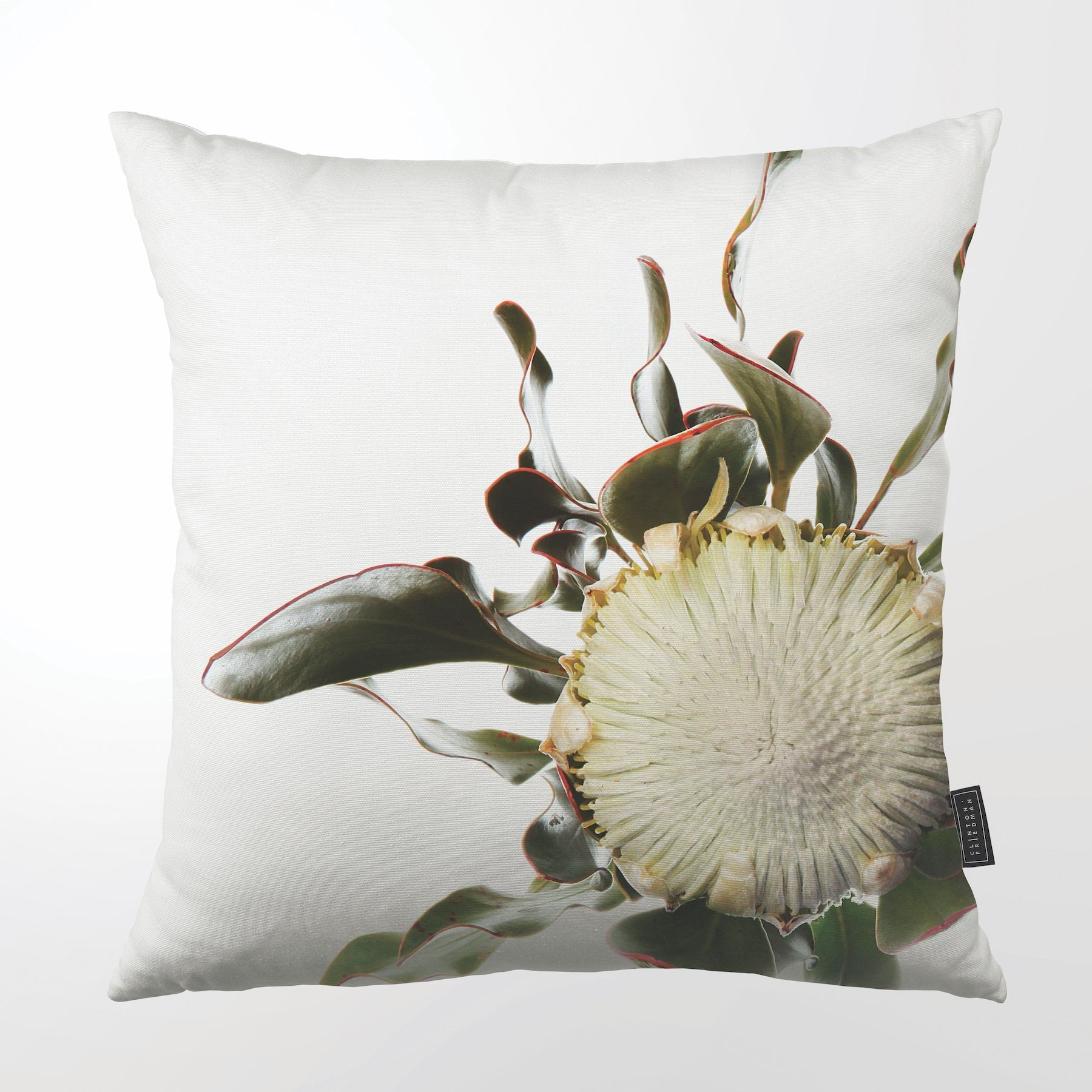 "FYNBOS PROTEA THROW PILLOW by Clinton Friedman at SARZA. 22"", CF-TP-FYN-PRO-22, Clinton Friedman, cushion cover, fynbos protea, homeware, protea, SC600Z-073, scatter cushion, throw pillow, throw pillows"