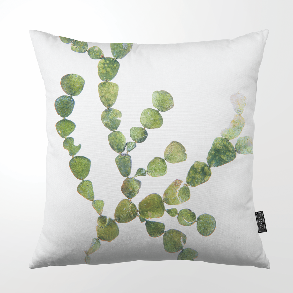 SEAWEED THROW PILLOW by Clinton Friedman at SARZA. Clinton Friedman, cushion covers, decor, homeware, scatter cushions, seaweed, throw pillows