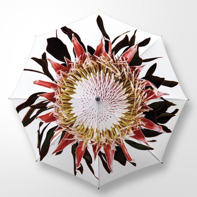 CLINTON FRIEDMAN USA NEW YORK KING PROTEA UMBRELLA