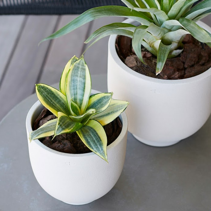 U-PLANTER AND TRAY OYSTER by Vorster & Braye at SARZA. Ceramics, decor, homeware, planters, u-planter, Vorster&Braye
