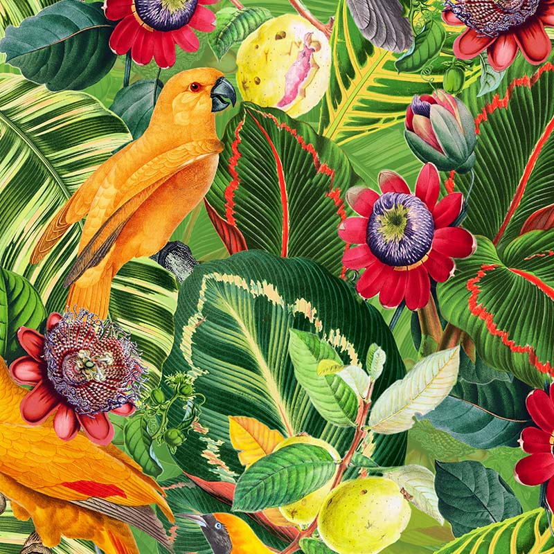 Yellow Parrots in Jungle with Passiflora