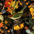 Colorful Birds and Redouté Flowers – Black by Robin Sprong at SARZA. Botanical, Floral, Robin Sprong, Uta Naumann, Wallpaper, Wildlife