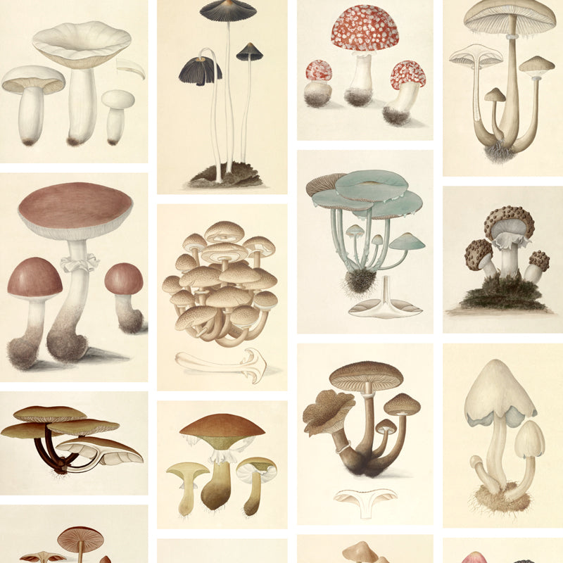 Agaricales by Robin Sprong at SARZA. Botanical, Robin Sprong, Wallpaper, Wunderkammer