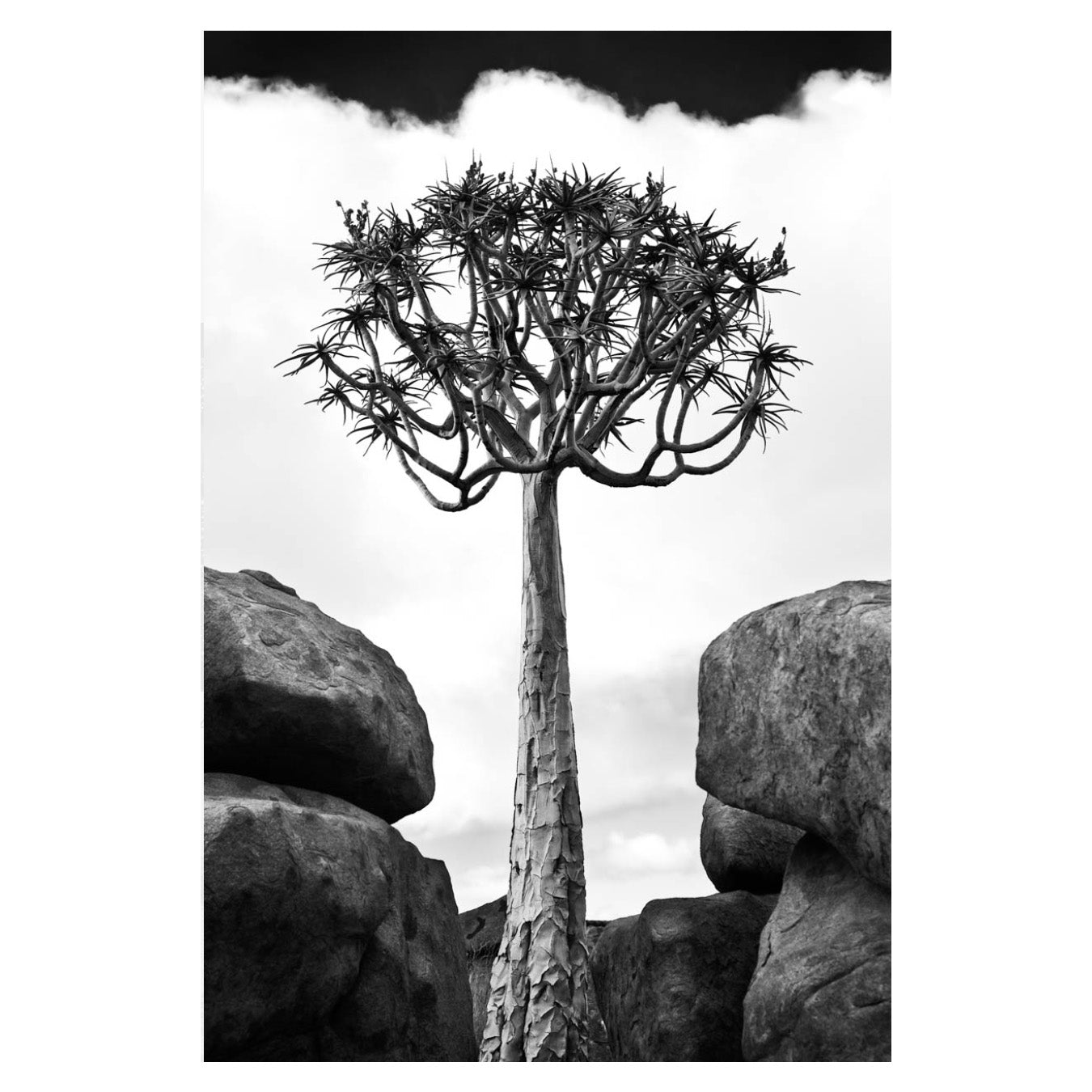 NAM_41 by David Ballam at SARZA. art prints, David Ballam, framed canvas, Kokerboom V, Landscapes, limited edition, Namibia, Rough cuts, wall art