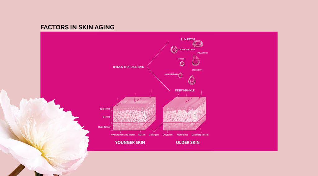 factors in aging skin