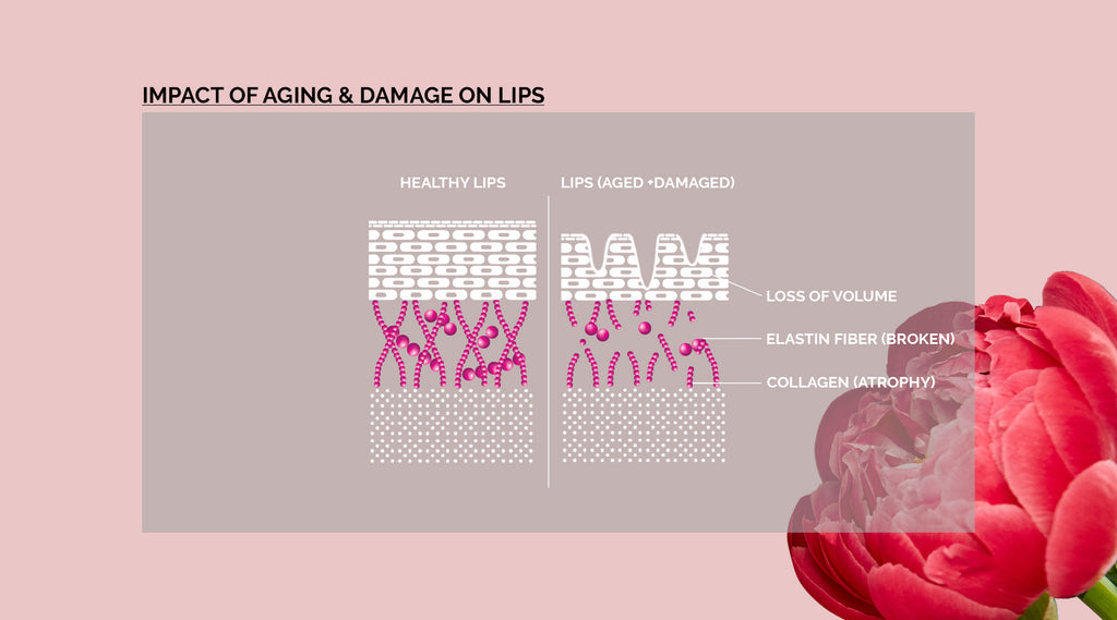 diagram healthy and not healthy lips
