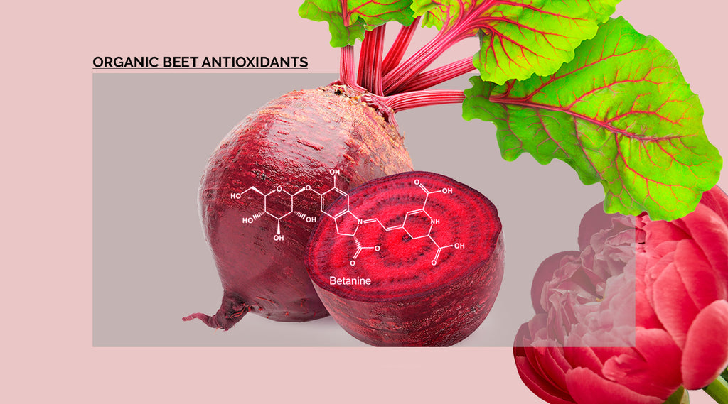 beet extract diagram