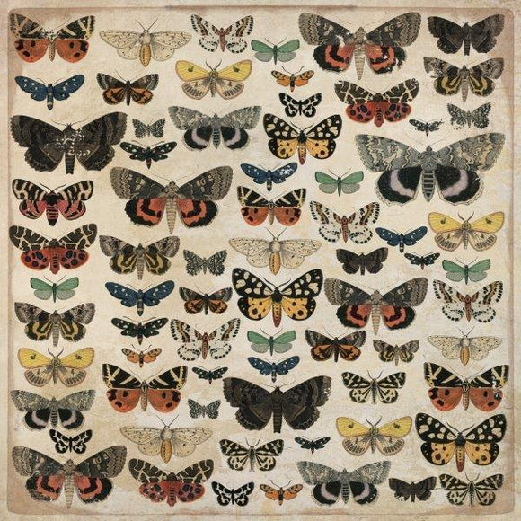 P2542 - Kaisercraft : Anthology 12x12 Scrapbook Paper - Entomology