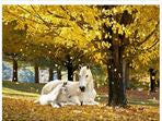 Diamond Art - Horses under Tree