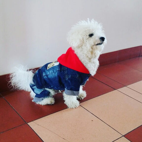 Blue / S Denim Dog Coat With Hood