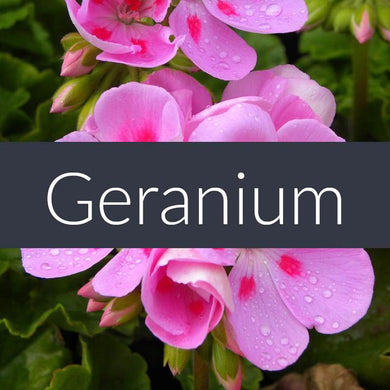 Finesse Geranium Essential Oil 10ml