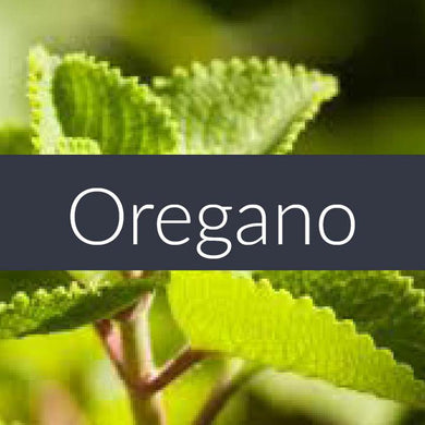 Finesse Oregano Essential Oil 10ml