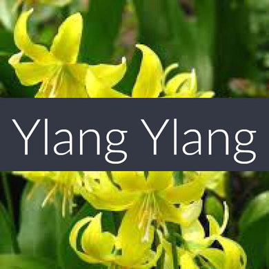 Finesse Ylang Ylang Essential Oil 10ml