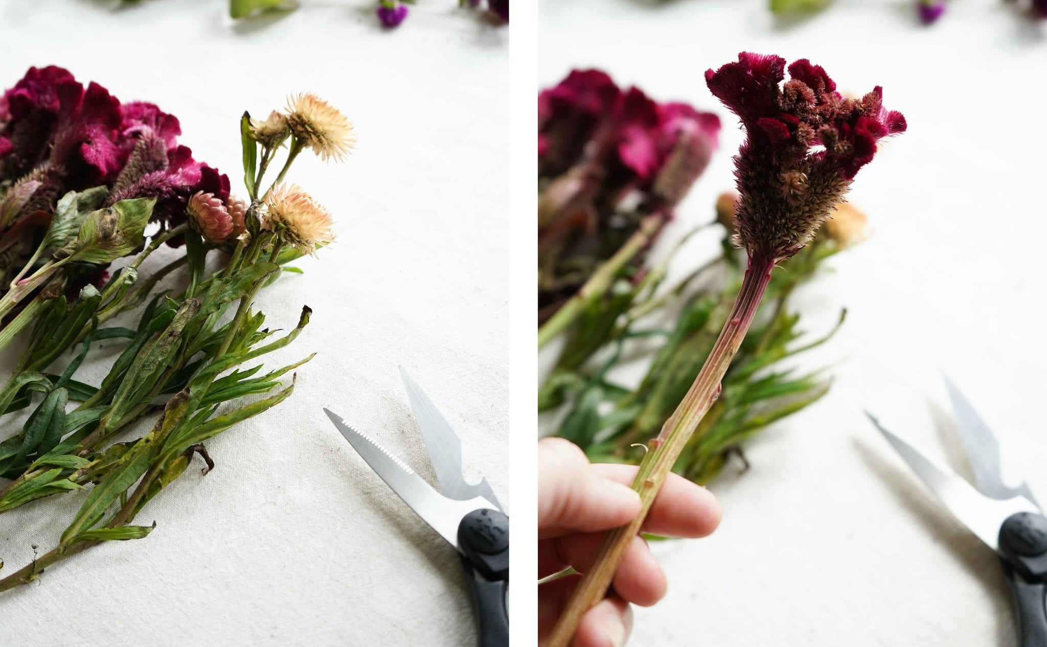 Taking off the extra leaf on a fresh flower bouquet in order to prepare them to dry