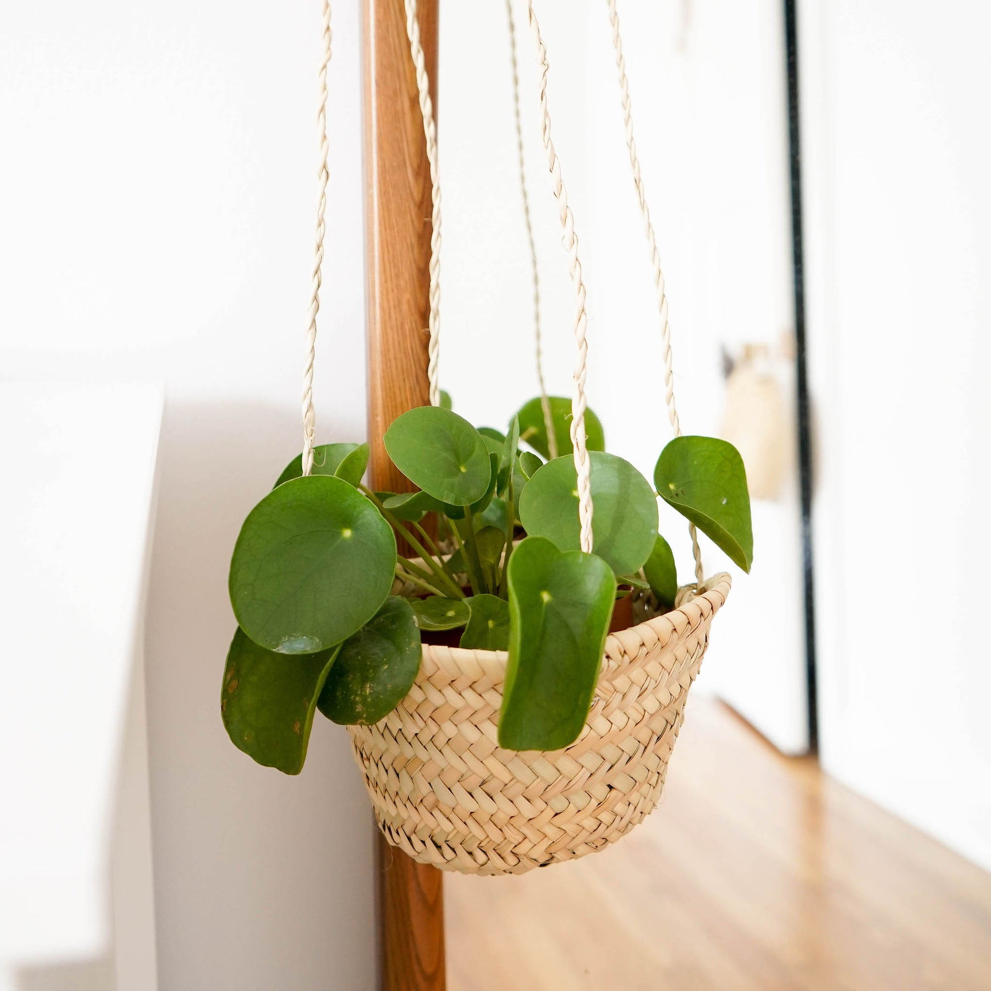 Handwoven plant hanger with a green money plant