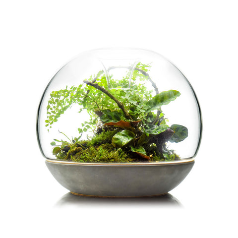botanica boutique biodome concrete glass top
