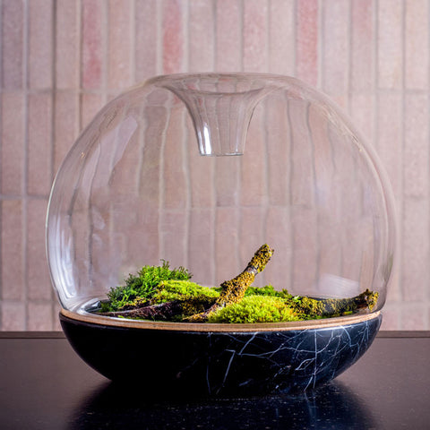 Biodome Nero Marble Glass Top - Botanica Boutique