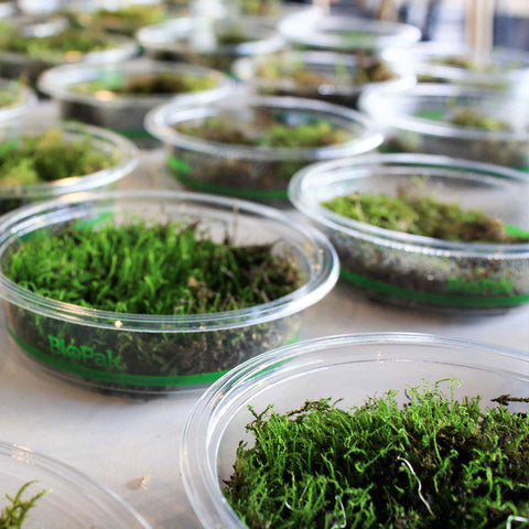 Living Moss for Botanica's Sanctuary