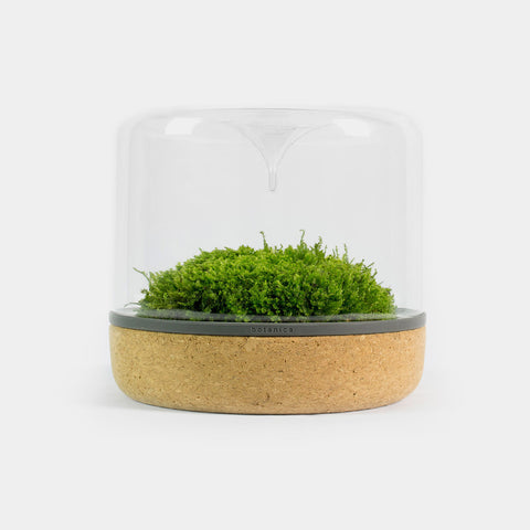 Botanica sanctuary rainforest top cork terrarium with moss