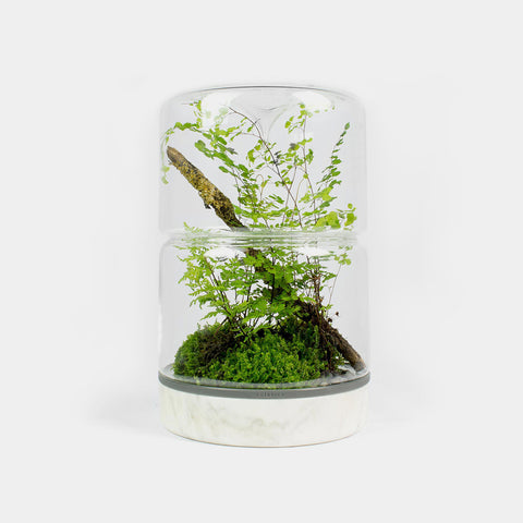 Botanica sanctuary rainforest double top carrera marble terrarium