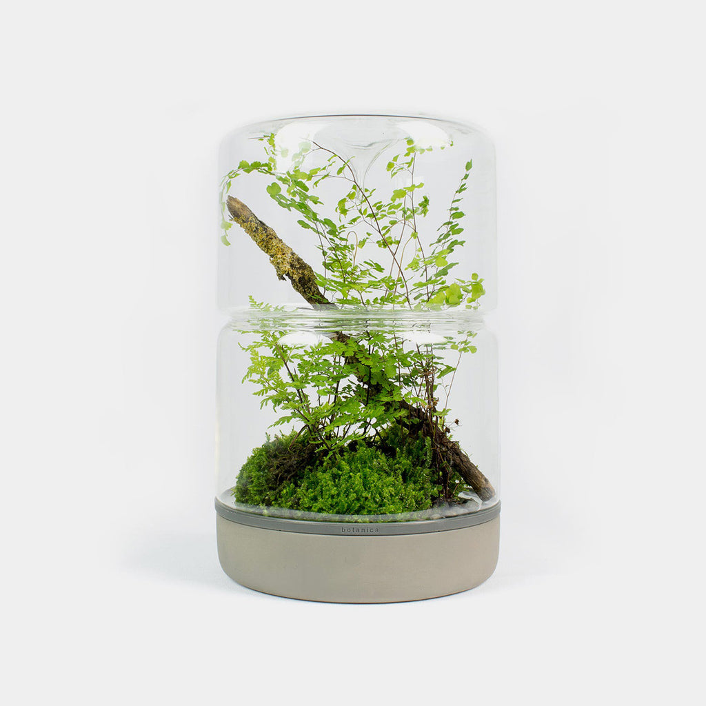 Moss Sanctuary M Rainforest | Concrete