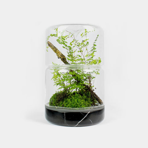 Moss Sanctuary M Rainforest | Nero Marble