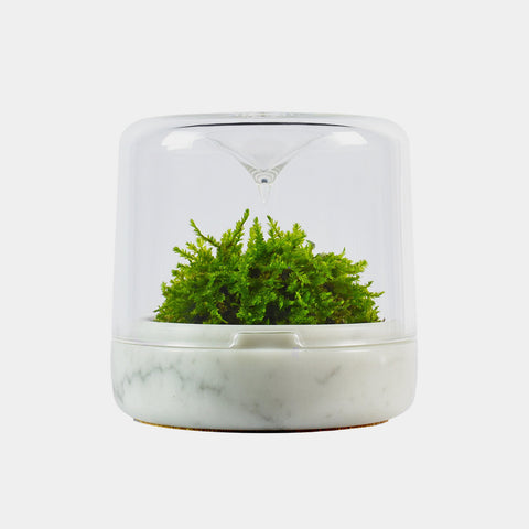 Moss Sanctuary S | Carrara Marble