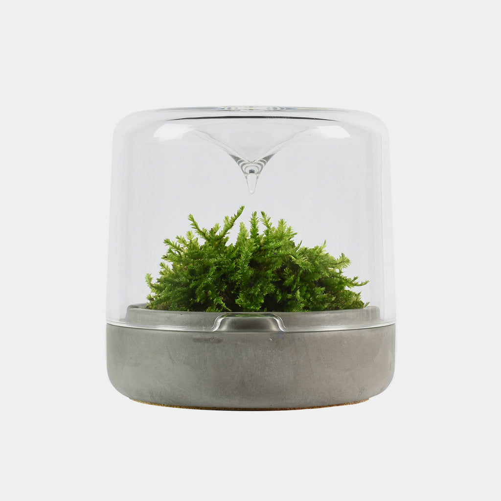 Moss Sanctuary Small Concrete base botanica boutique gifts