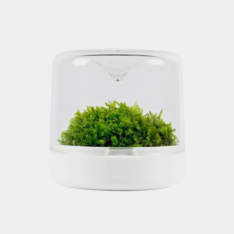 Moss Sanctuary S | White