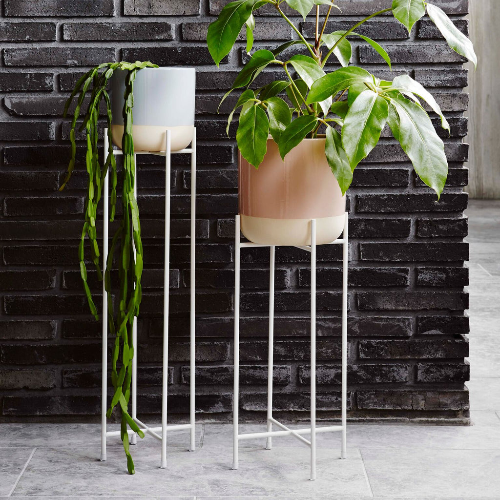 Iris Pot Plant Stands Tall | WHITE
