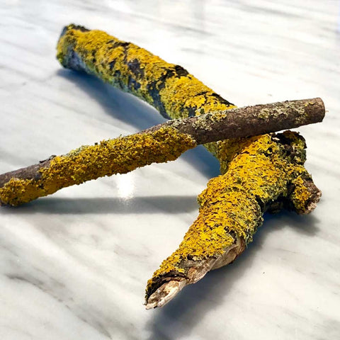 Lichen stick for Terrarium | Biodome or Sanctuary M