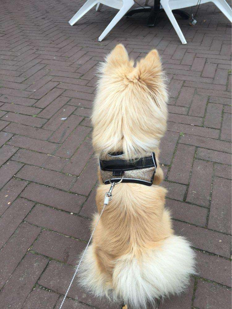 Shimmer Shine Dog Harness Harness - iplayfetch.com