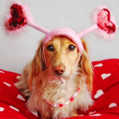 Why your dog makes the best Valentine's date