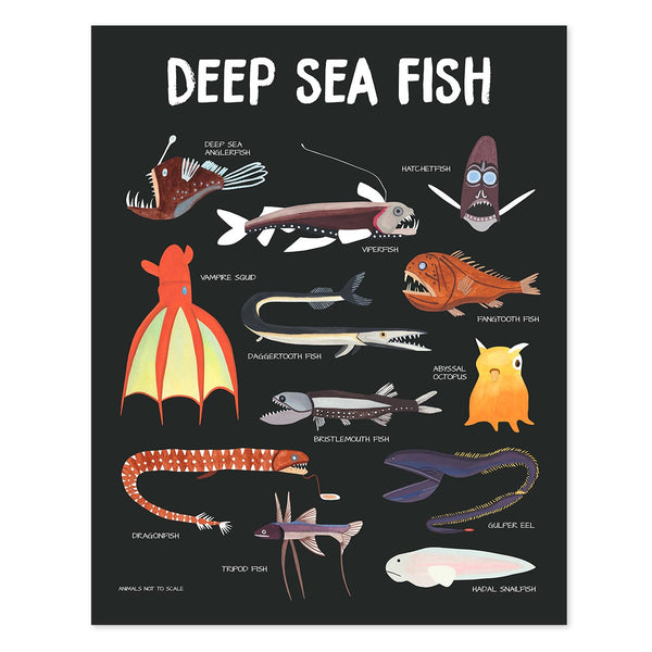 deep sea fish poster - telegraph paper co