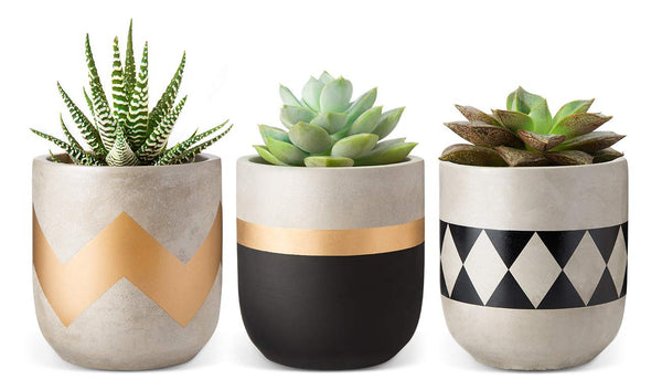 Shop Trio Cement Planter Set -  Accessories For A Happy Trendy Modern Home at Low Prices  Color Home Happy - Accessories for a happy modern home